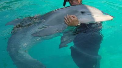 New Rehab Home For Manatees At The Clearwater Marine Aquarium