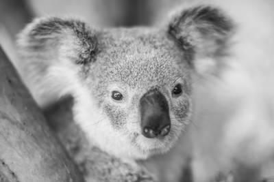 Animals return home after Australia's brush fires